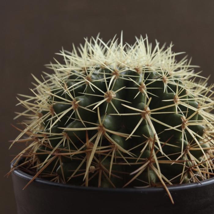 「トロピカル」をテーマに夏の植物大集合!