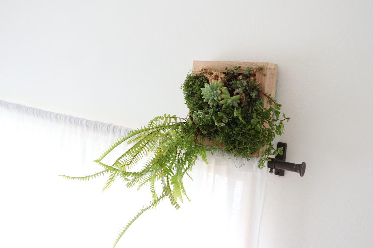 観葉植物のワークショップ